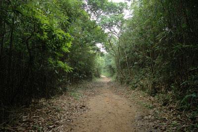 竹林 黃竹洋