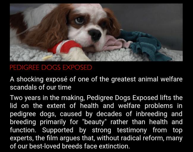 pedigree_dogs_exposed_screenshot